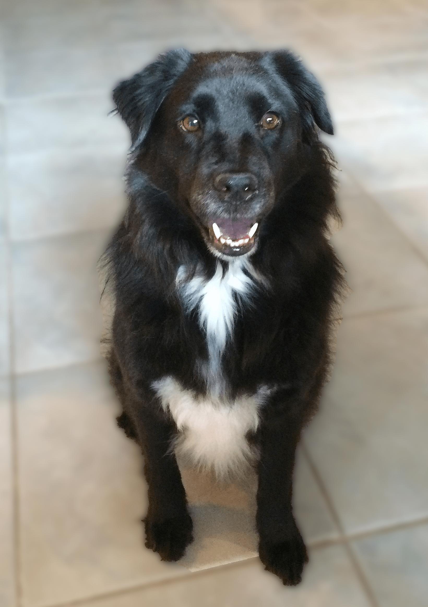 Ali-Rand-Websites-Dog-Sophie-Border-Collie