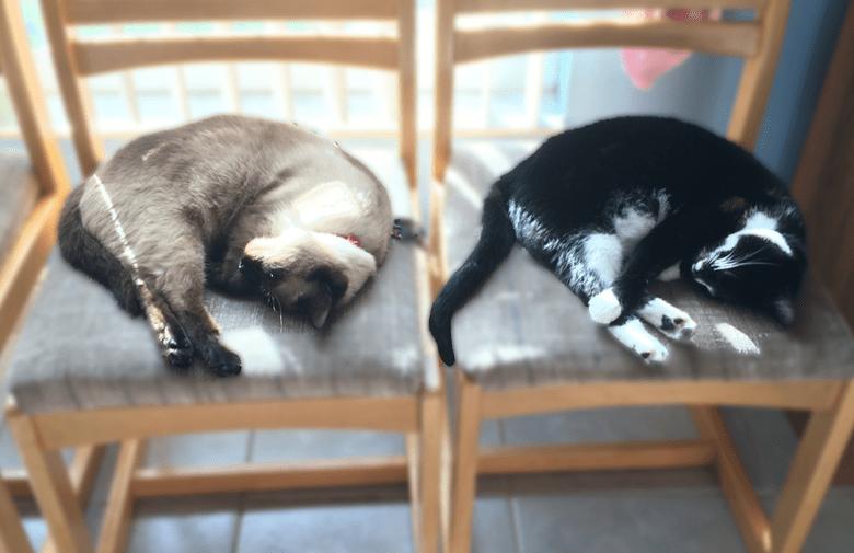 Ali's cats Fiona and Jackson